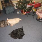 weihnachten-2009-001