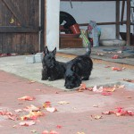 Lotte27.10.2011 003