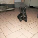 teddy28.06.2014 008