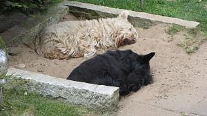 Bob u. Meg schlafend im Loch 001