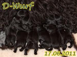 d-wurf-header